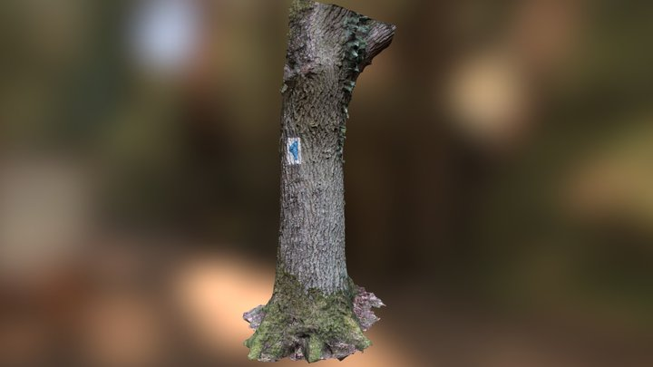 Tree trunk Luxembourg 3D Model