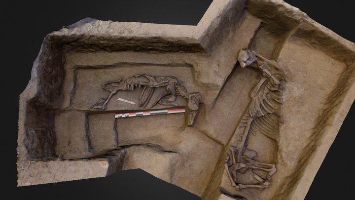 Horse skeletons 3D Model