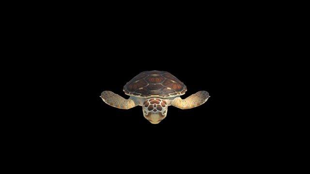 Loggerhead Turtle 3D Model