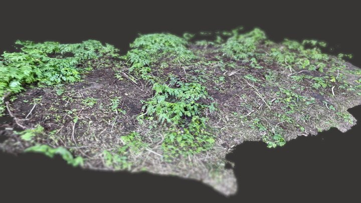 Scan of plant cover on ground 3D Model