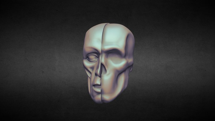 ECORCHÈ HEAD AND SKULL 3D Model