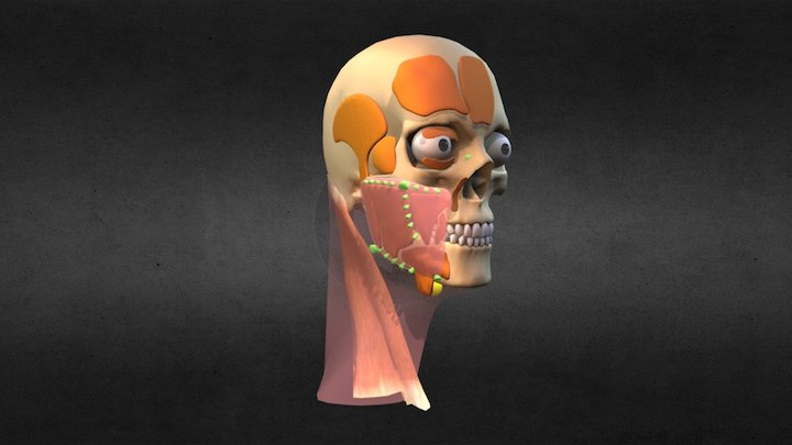 Anatomy-Old 3D Model