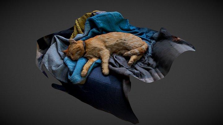 Sleeping Cat 3D Model