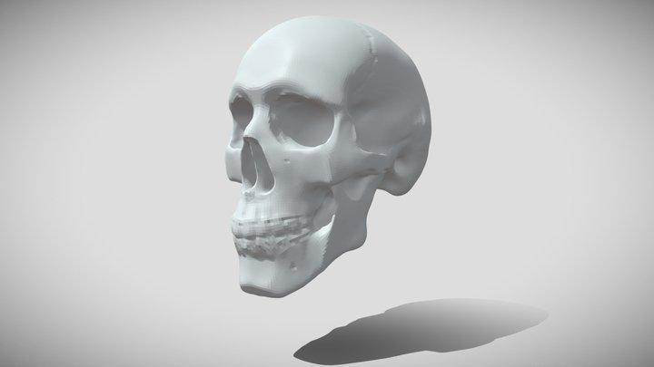 ZBrush Daily Skull Study 3D Model
