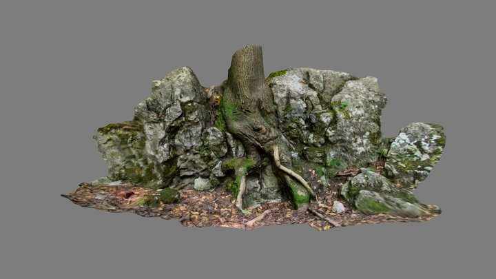 photoscan tree roots 3D Model