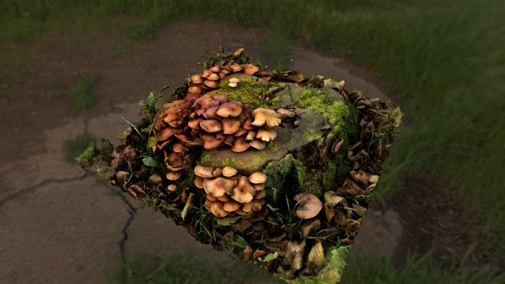 Stump and Mushrooms 3D Model
