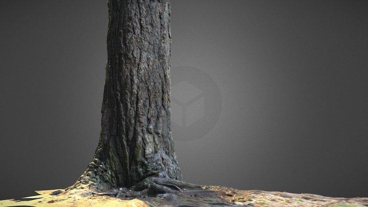 Tree Test 3D Model