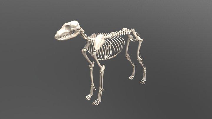Dog Skeleton 3D Model