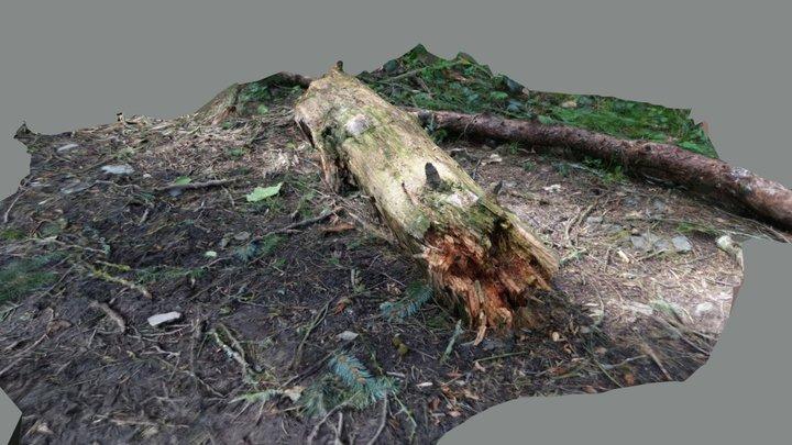 Log Photogrammetry Test 3D Model