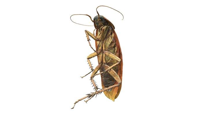 Cockroach (3D photogrammetry scan) 3D Model