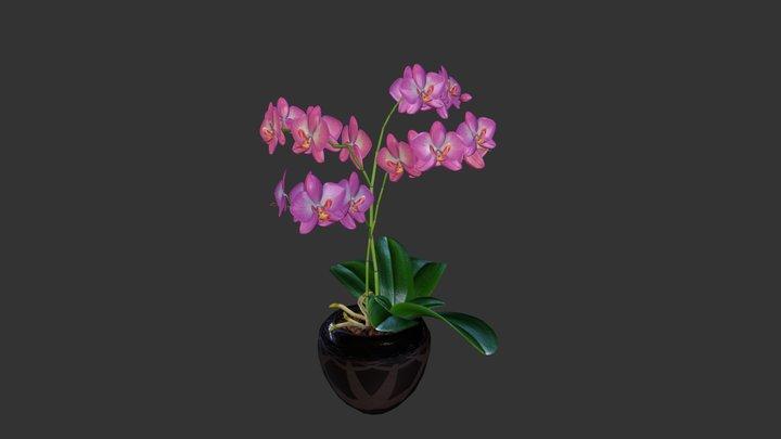 Vanilla Orchid 3D Model