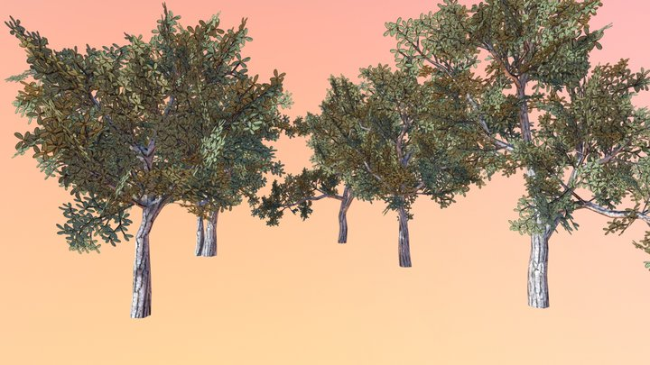 Sand live oak (Quercus geminata) 3D Model