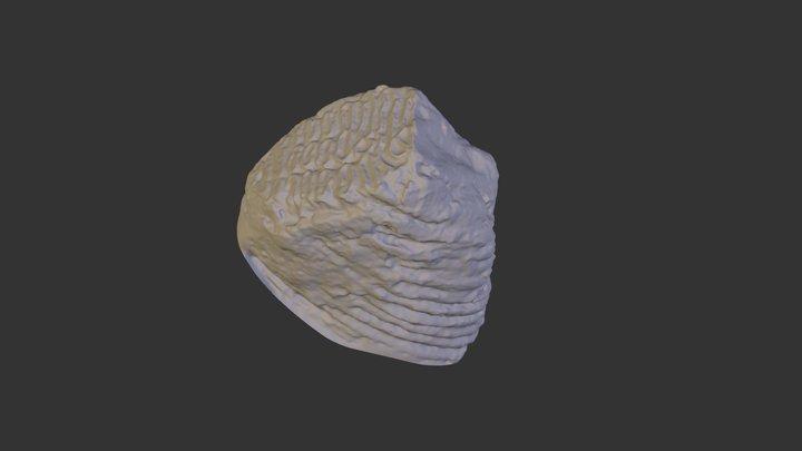 Mtooth 3D Model