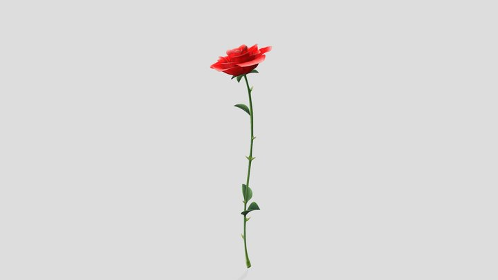 Open Bud Single Red Rose 3D Model