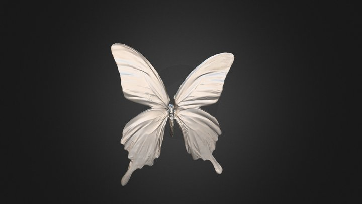 Butterfly 3D Model Scanned by KSCAN 3D Scanner 3D Model