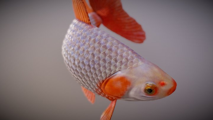 Jikin goldfish 3D Model