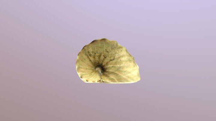 闊船蛸Argonauta hians 3D Model
