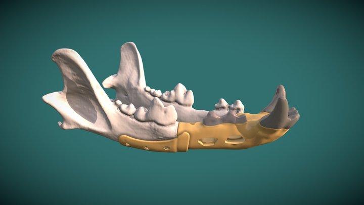 Dog jaw reconstruction PEEK and Titanium 3D Model