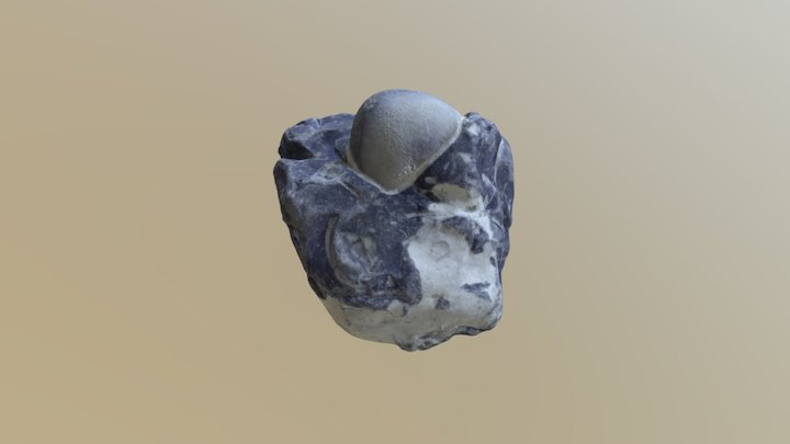 Stone with sea urchin fossils in it 3D Model