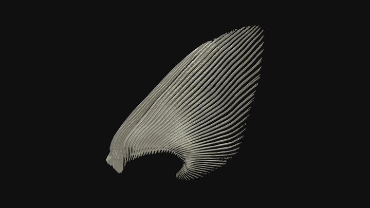 Sturgeon pectoral fin rays 3D Model
