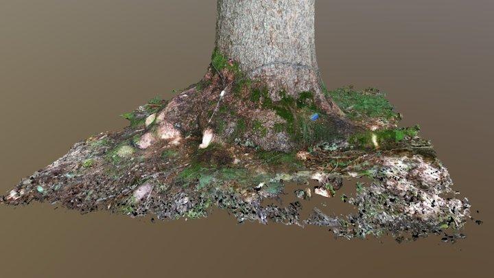 Wald 2 3D Model