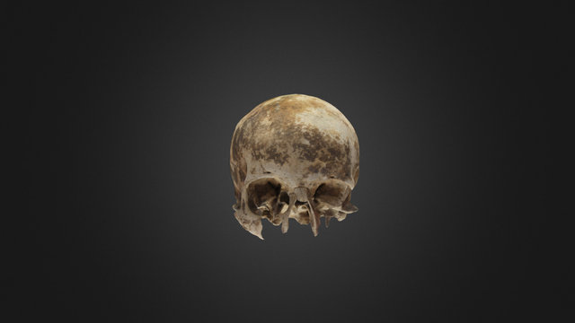 Skull BZN 2 3D Model