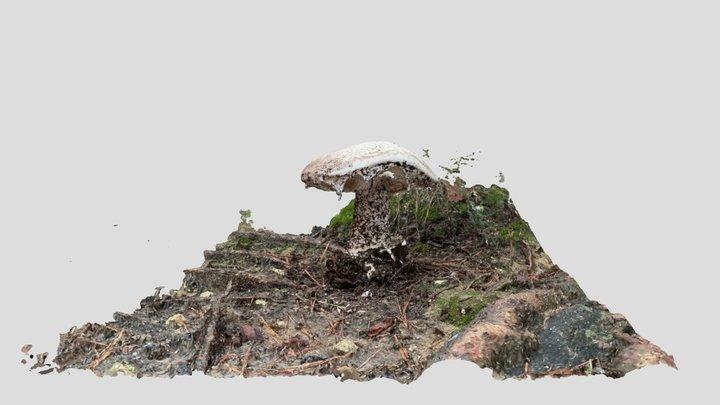 White mushroom 3D Model