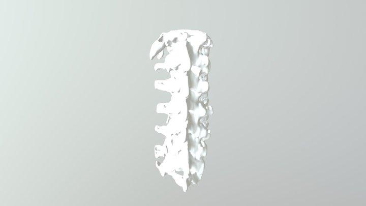 lumbar vertebrae 3D Model