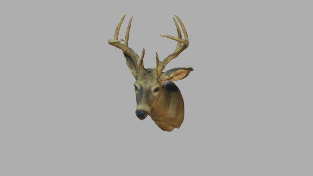 Deerhead 3D Model