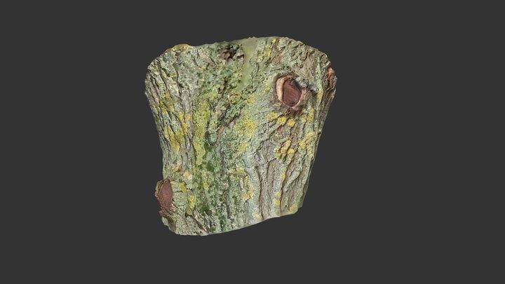 Bark02 3D Model