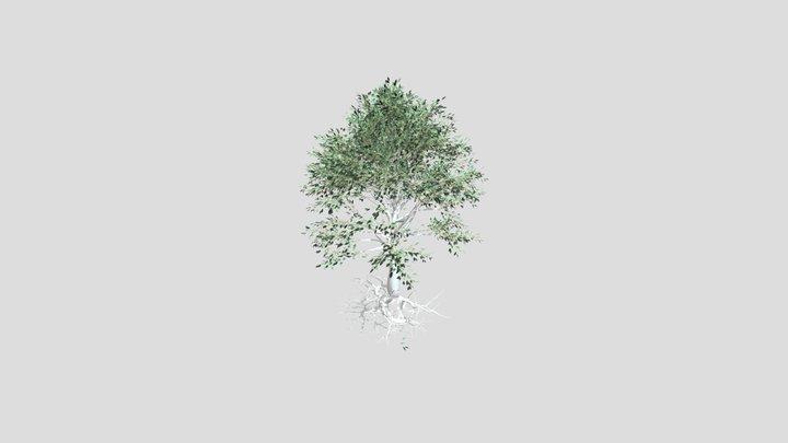 Tree Test Kayla Rich 3D Model