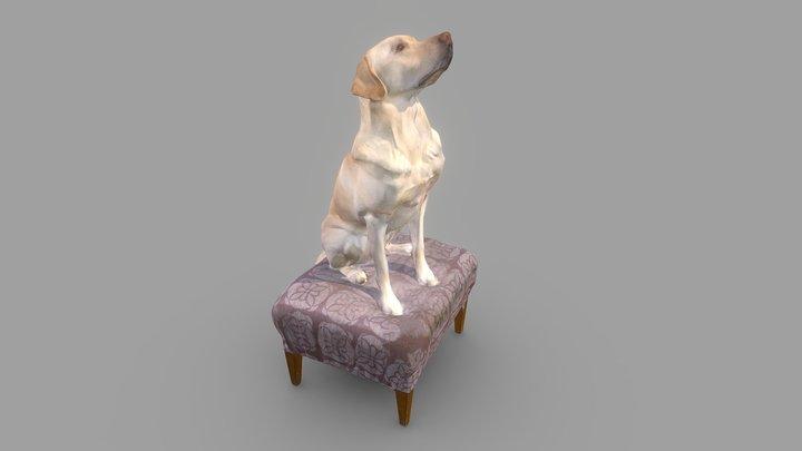 Wilson Dog Color 3D Scan 3D Model