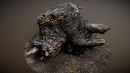 Tree Stump Root - Photogrammetry 3D Model
