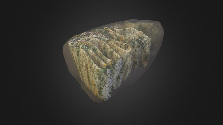 mitocondria teste 01 3D Model