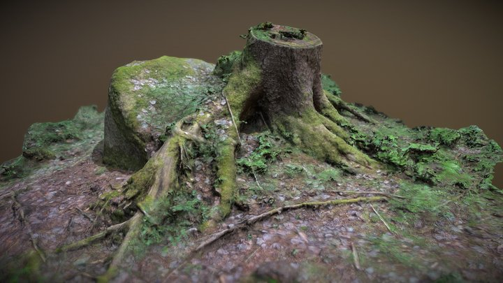 Tree stump in a german forest 3D Model