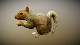 Animated Squirrel critter (Free-Rigged-L.Poly) 3D Model