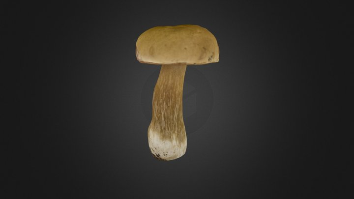 Boletus edulis mushroom 3D Model