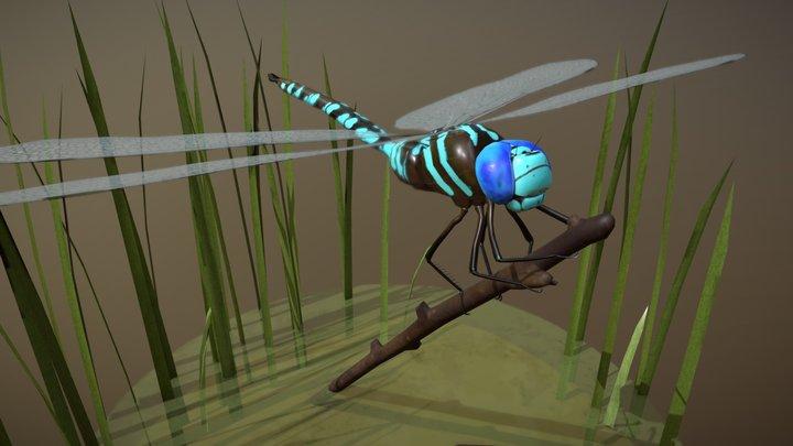 Blue Darner Dragonfly 3D Model