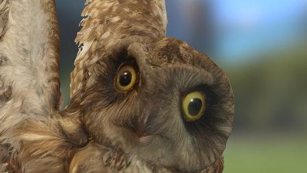 Short Eared Owl 3D Model