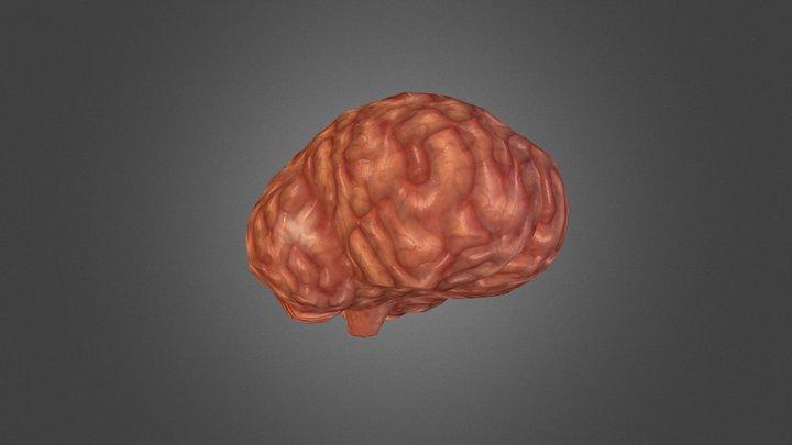 Brainy McBrain 3D Model