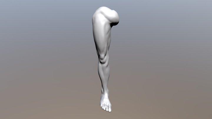 Leg anatomy 3D Model