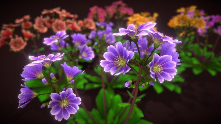 Flower Lewisia 3D Model