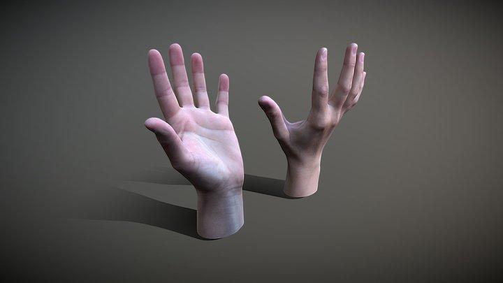 Female Hands 3D Model