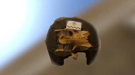 Sloth Rostro bottom 3D Model
