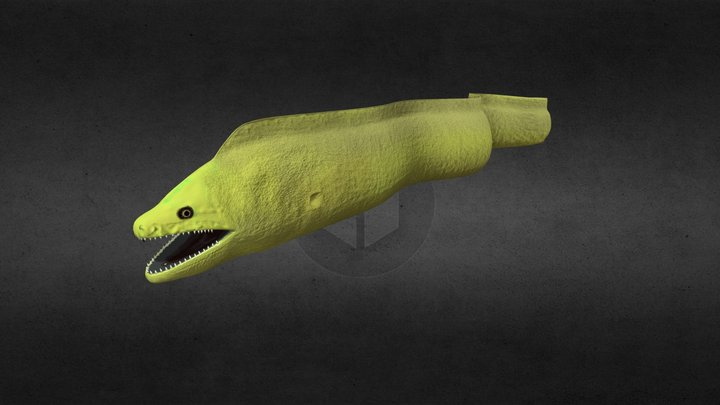 Eel Swimming 3D Model