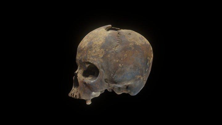 Human Skull female 3D Model