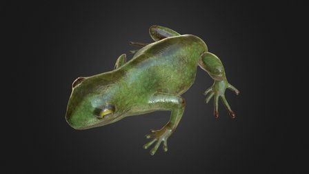 Frog #1 3D Model
