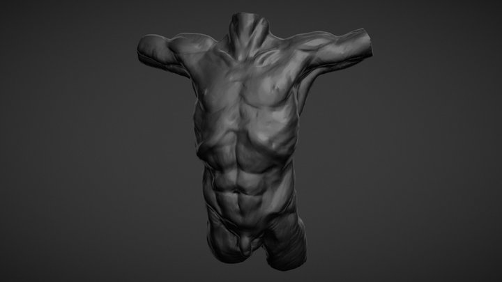 Sculptjanuary19 - Day03 - Chest (Body) 3D Model