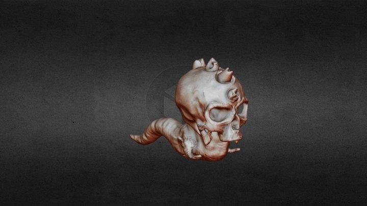 Worm Skull 3D Model