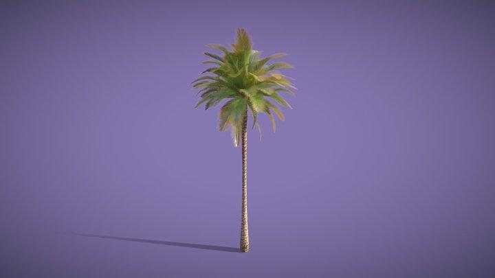 Arabic Palmtree 3D Model